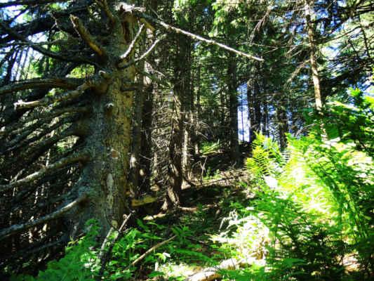 Pralesy na hřebeni