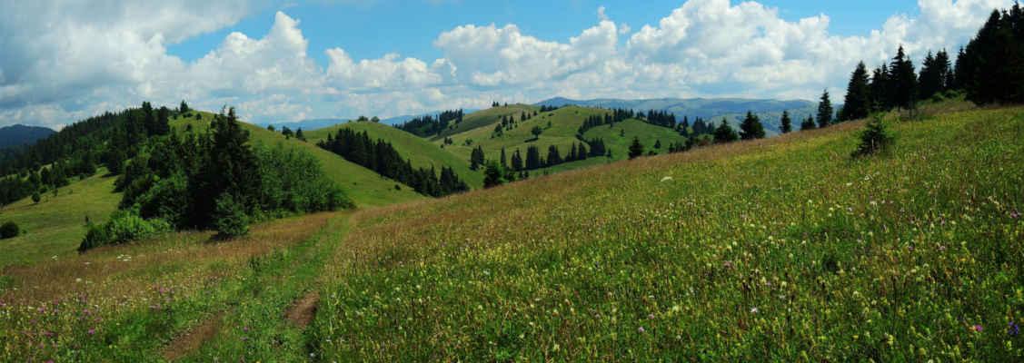 Příjemné vršky pohoří Ciuc, kde se les střídá s loukou, ta zase s lesem a pastvinou.