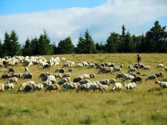 Ráno si ciobani (čti čobani) přišli popovídat.