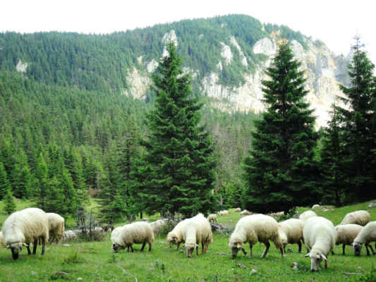 Nájezd ovcí. Tiše jsme je pozorovali a nerušili. A divili se kolik toho sežerou.