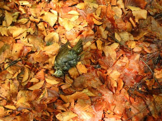 Ochranáři to asi sbíraj. Našli jsme jenom mrtvého drozda. Na naučné ceduli vedle ale byla vyfocená i mrtvá sova.