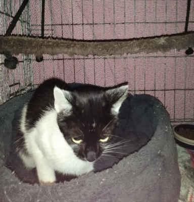 11.9.2020 - Oznamovatelé k nám přivezli kočičku, která se už několik dní zdržovala v objektu firmy Ryas v Hodoníně. Kočička má asi půl roku, je vyhladovělá, bojí se. Dostala jméno Etelka.