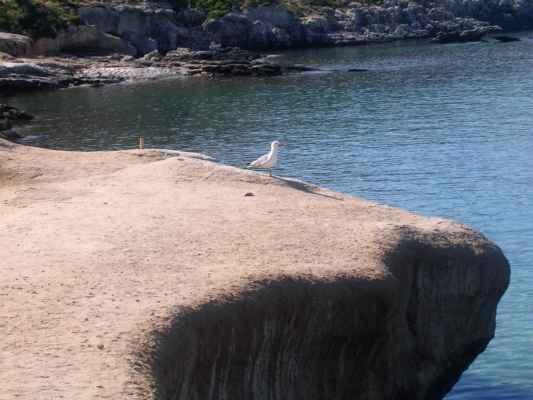 Racek Je to jeden z bílých ptáků, loví rybky do zobáku. A ten lov ho asi baví, proto je tak usměvavý. Každé malé dítě ví, že je racek chechtavý. Autor: Zuzana Pospíšilová Zdroj: Veršovaná encyklopedie