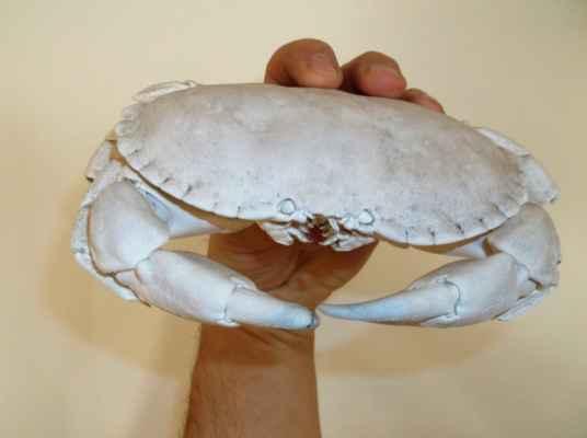 krabí skelet