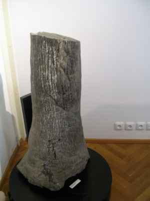 fosilie - zkaměnělý kmen stromu.  Stáří je odhadováno na stovky milionů let.