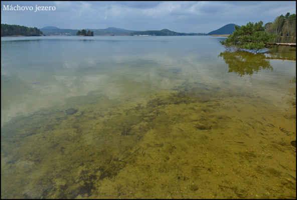 """Máchovo jezero - Zatím hezky čisté vody našeho,asi nejznámějšího """"jezera"""".."""