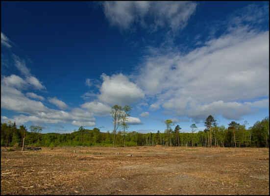 Středohoří - Smutný pohled na torzo lesa,kam jsem 30 let chodil..((